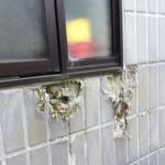 新居を探す場合に外壁で絶対確認した方が良いこと