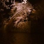 彦根城の夜桜見物